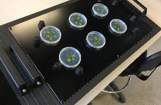 hyperaixpert plant phenotyping